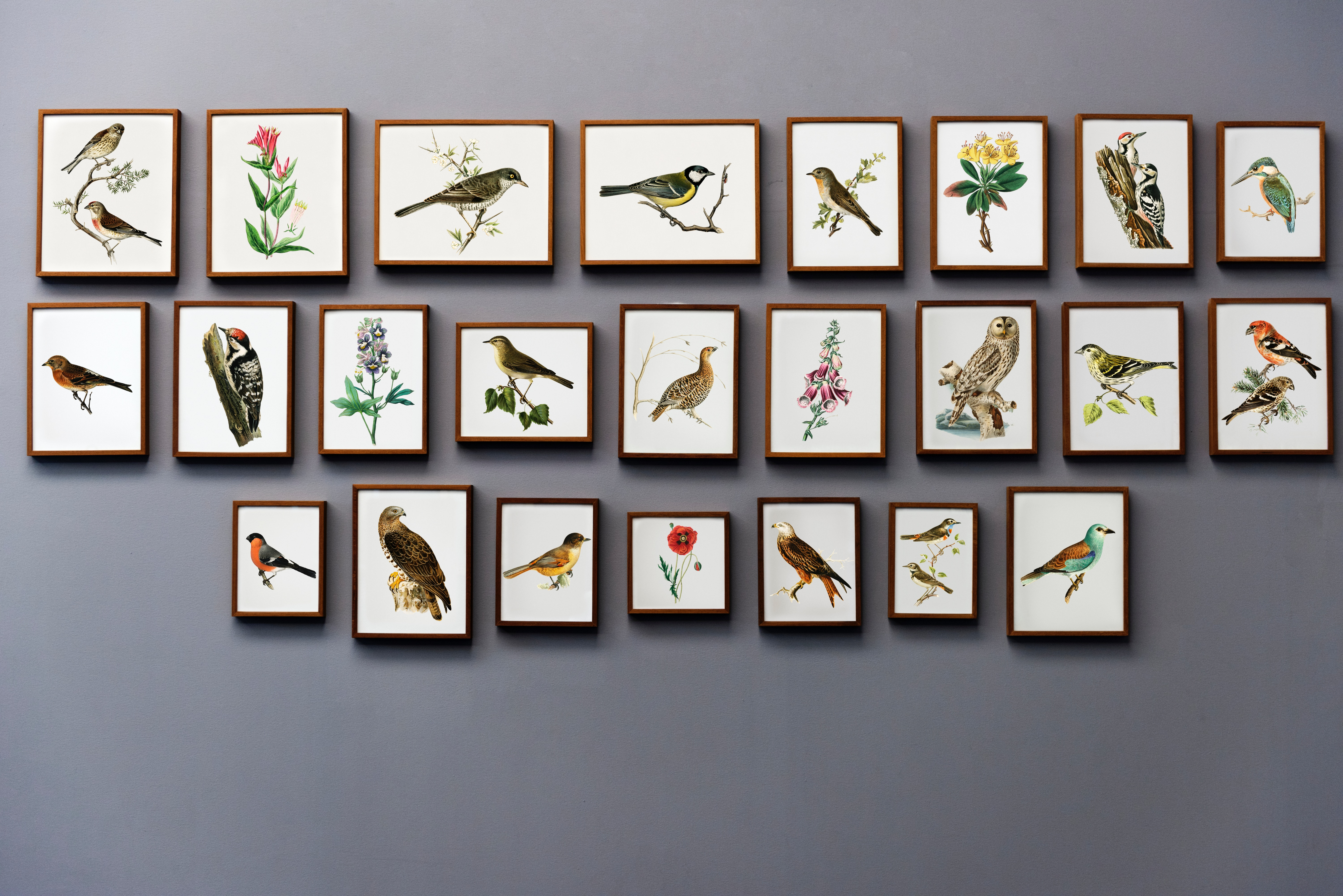 Collection of framed bird paintings on grey wall